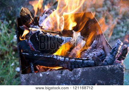 Background of Firewood outdoors in spring forest