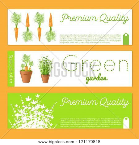 Set Of Vector Banners With Carrots.gift Banner Sand Cards With Fresh Greens And Carrot. Stock Vector