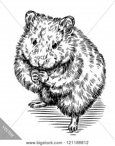 engrave ink draw hamster illustration