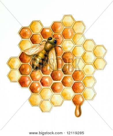 A bee filling the hive cells with fresh honey. Hand painted illustration