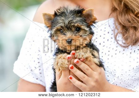 woman beautiful young happy with long hair holding small dog on natural background
