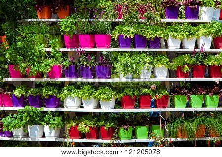 Colorful pots with flowers on stellage