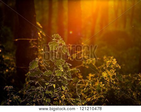 Glowing plant  foliage