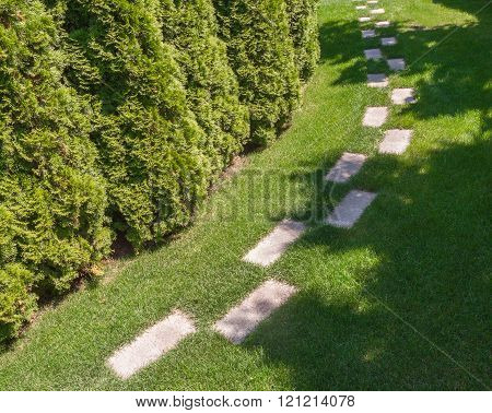 The path in the garden along the hedges of arborvitae