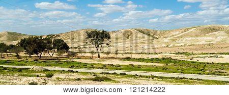 Negev Desert In Early Spring, Israel