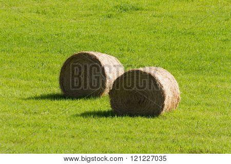 Harvesting hay. summer field of hay bales