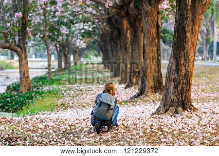 Tourist woman take the picture of blooming Pink Trumpet (Tabebuia rosea) trees at Kamphaeng Saen, Nakhon Pathom province, Thailand