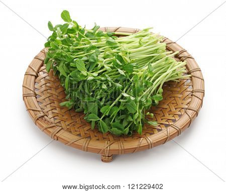 pea shoots on the bamboo strainer, chinese vegetable