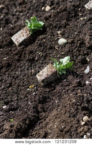 green Flower Seedling and black dirt in spring