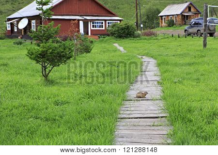 Gopher on the wooden walkway. Health complex Cheremshanka.