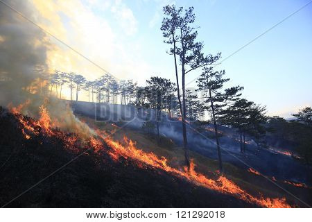 Severe drought. Fires destroy forest and steppe