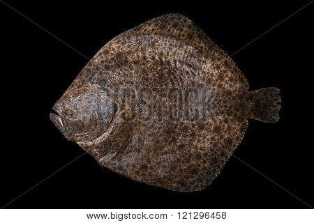 Whole raw flatfish caught in Spain