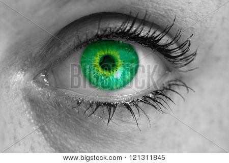 Eye with green iris looks at viewer concept macro