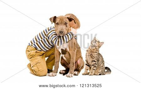 Loving boy, pit bull puppy and a cat