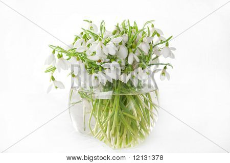 Bunch of snowdrops in transparent vase isolated on white