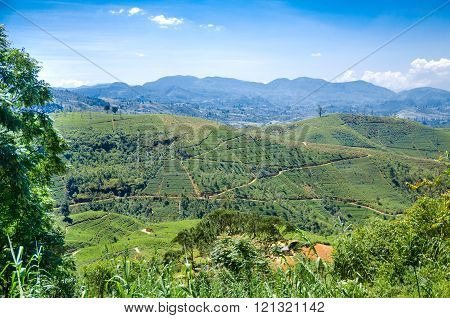 Tea plantations in the highlands.. Sri Lanka. Ceylon