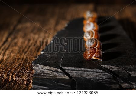 Row From Snail Shells On Black Stone