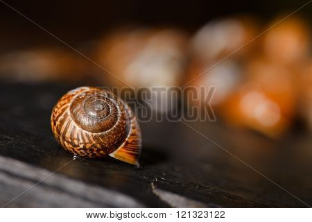 Single Snail Shell On Black Stone Next To Others