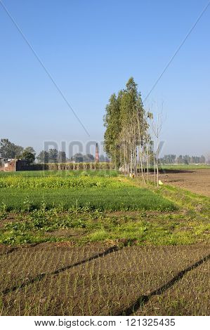 Punjabi Agriculture
