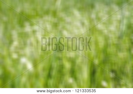 Defocuced Background of Close up of green grass in spring