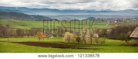 Blooming Trees In Spring Mountains. Snow And Green Fields