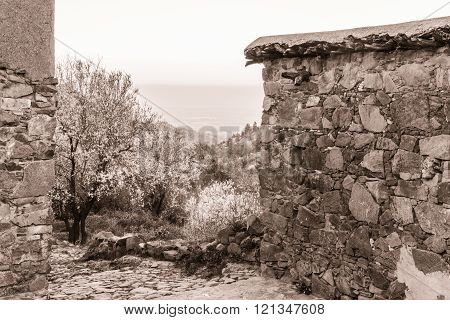 Fikardou village scene with blooming almond trees- sepia toned