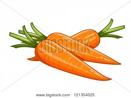 Carrot vector illustration. Isolated white background. Transparent objects used for lights and shadows drawing