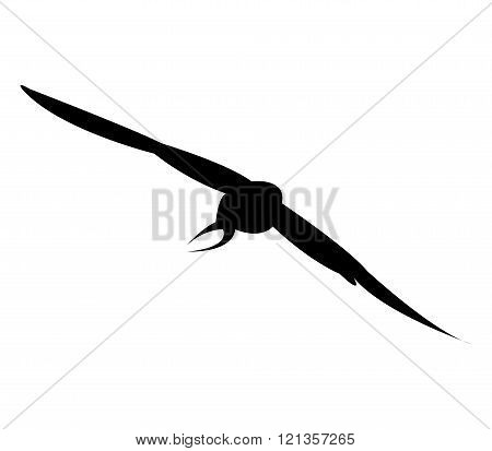 illustrated silhouette swallow on a white background