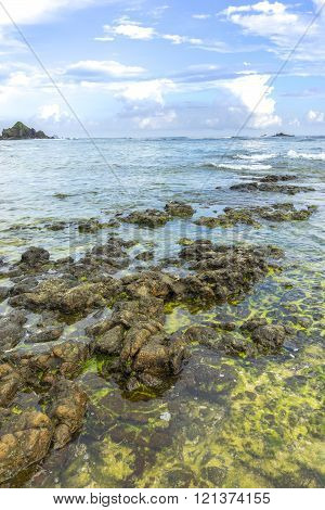 Natural green moss at beach rock with nature sunlight early morning