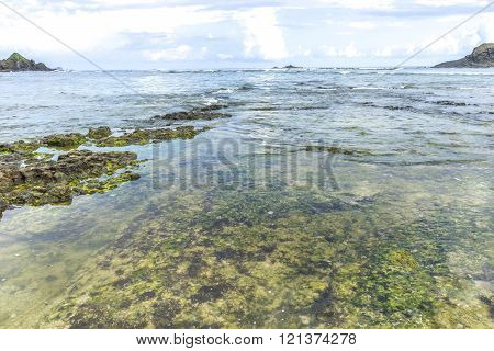 Natural rock mosses at Lombok Beach, Indonesia
