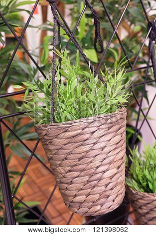 Artificial Green Plant or Artificial Plant Hanging on A Bamboo Wicker Weave Basket for Home and Office Decoration without The Care.