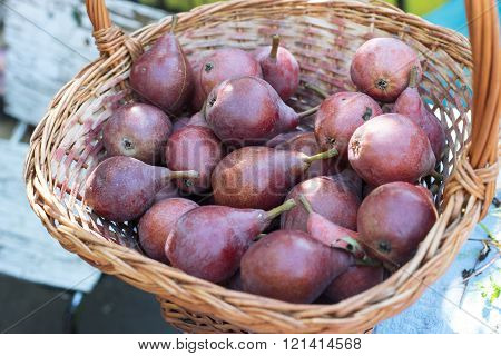 Ripe pears / photography of pears in a basket on rustic wooden background / close-up. Selective focus.