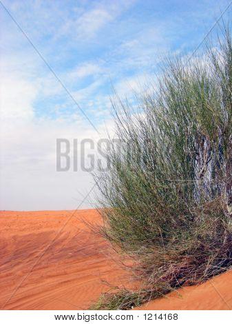 a desert plant on a sahara desert