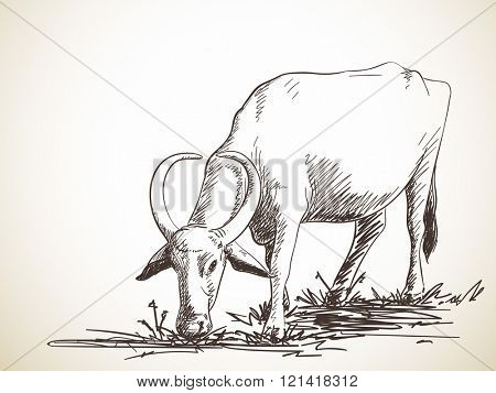 Sketch of grazing buffalo, Hand drawn illustration