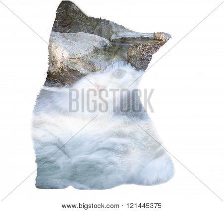 American Shorthair Kitten Double Exposure With Waterfall