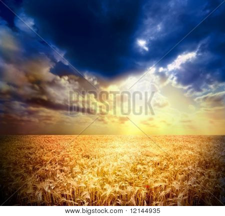 a sunset and a wheat field