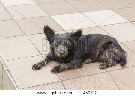 Homeless Miserable Dog Lying On The Floor. Pets