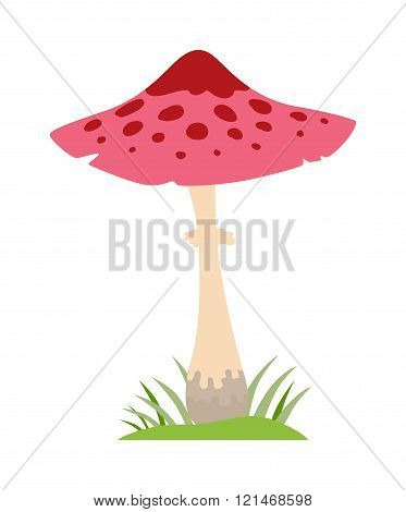 Amanita poisonous mushroom, isolated vector on white background.