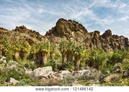 Scenic view of a rocky mountainside in Palm Springs framed with a row of palm trees and other natural foliage.  Mo