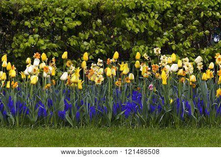 Spring Flower Lawn