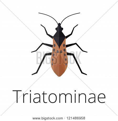 Triatominae skin parasite insect bug .