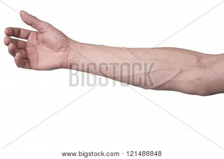 Male arm with veins on a white background