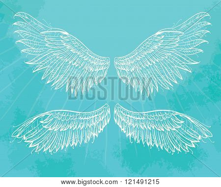 Vector hand drawn wings.