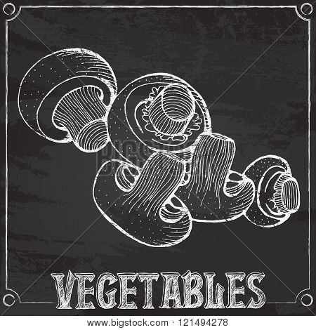 vector chalk drawing of champignons mushrooms