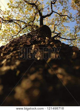 Trunk perspective