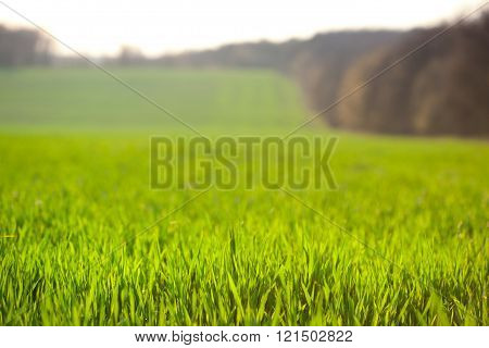Farmland Background, Focus On Front Rows Grass