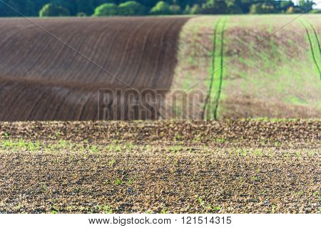 Agricultural Field On A Hill With Young Sprouts