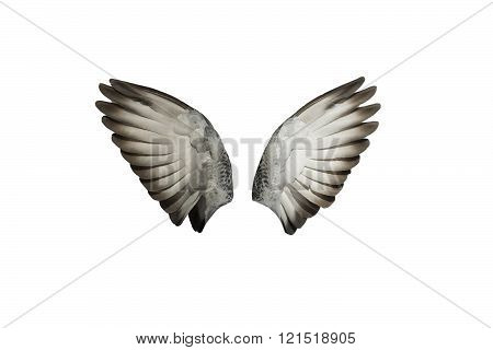 two large gray wings of a bird