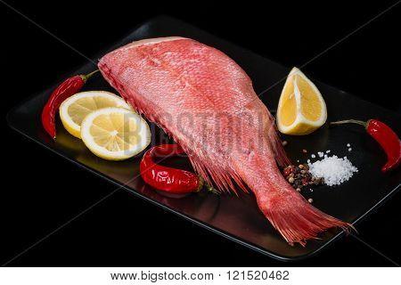 Marine red grouper.