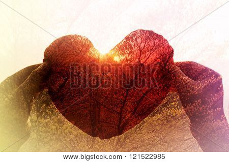 Hand Take Red Heart In Sunset Twilight Colour And Tree
